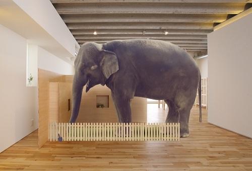 ゾウ 足 大きさ 特徴