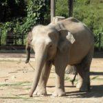 ゾウが絶滅すると生態系にどんな影響が起こる!?
