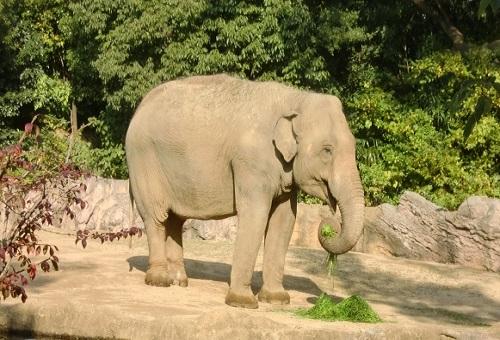 ゾウ 種類 違い