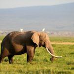 象の密猟が無くならない理由や対策方法について!