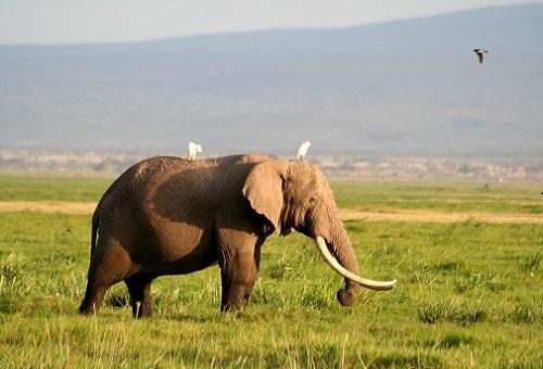 象 密猟 理由 対策