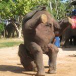ゾウの鼻のにはどんな役割があるの!?