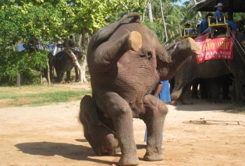 ゾウ 鼻 役割