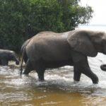 日本で象が見れるおすすめの動物園は!?乗れる場所はある!?