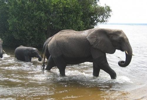 象 日本 乗れる 動物園