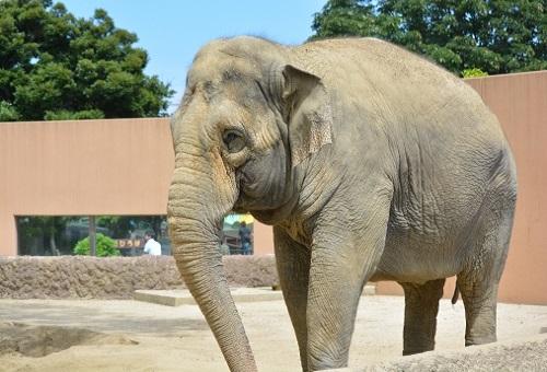 ゾウ 餌 動物園