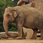 象が砂を食べるのはなぜ!?
