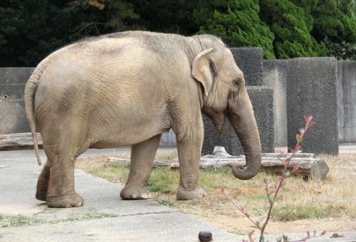 ゾウ 体重 平均 子供 図り方 測り方