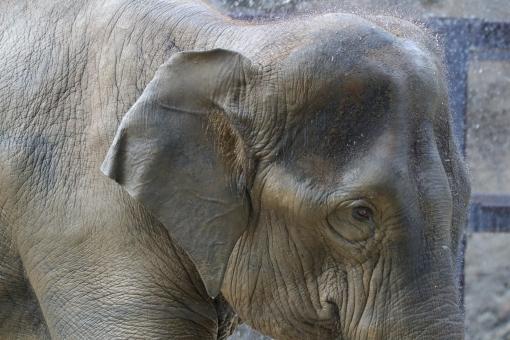 ゾウ 革 種類 特徴