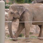 アメリカの共和党のシンボルがゾウの理由とは!?