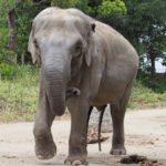 象の鼻はなぜあんなに長いの!?