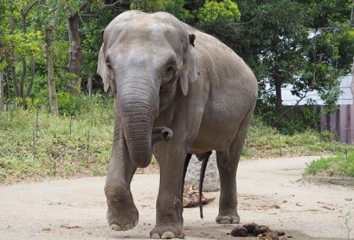 象 なぜ 鼻が長い