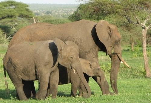 象 妊娠 出産