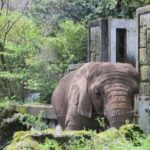 大きい象の耳の役割とは何!?