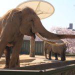 象の革のお手入れ方法!