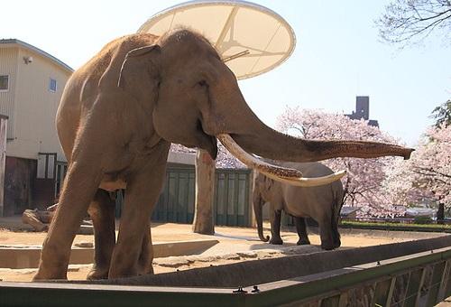 象 革 手入れ