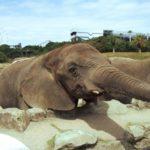 ゾウが砂遊びをする理由とは!?