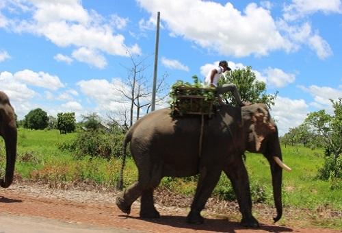 象 鼻 特徴 重さ 長さ