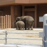 象の赤ちゃんの見た目の大きさや特徴は?