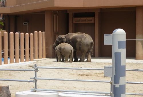 象 赤ちゃん 大きさ 特徴