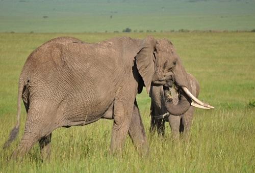 象 出産 年齢