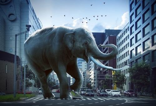 ゾウ ジャンプ できない