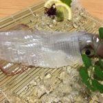 日本に生息しているイカの種類はどれくらいいる?