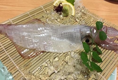 イカ 日本 種類