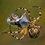 オニグモは地域によって巣をたたまない事もあるの!?