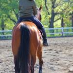馬に騎乗するようになった歴史とは!?
