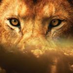 ライオンの目の色や特徴とは!?