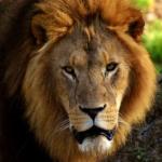 ライオンとハイエナの関係性とは!?