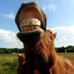 馬がストレスを感じた時にとる行動とは!?
