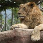ライオンの爪の威力!出し入れできる!?