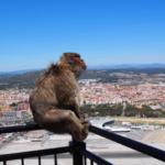 猿が家に侵入する時の対策方法とは!?