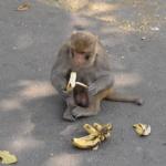 猿はなぜバナナが好きなの!?