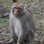 猿とチンパンジーとゴリラの違いって何!?