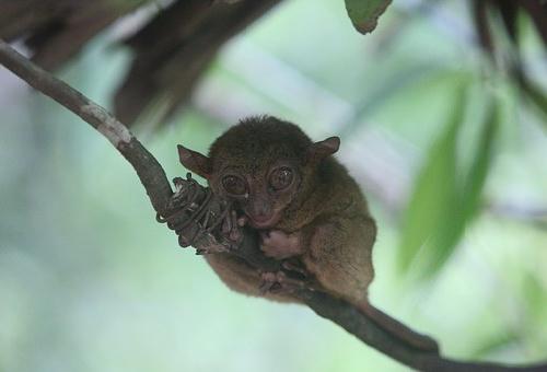 目 大きい 猿