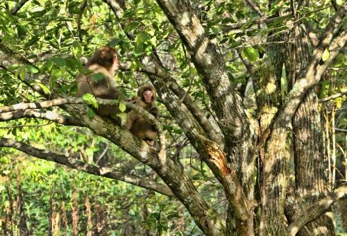 猿 飼育 駆除 許可