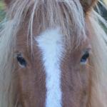 馬の視界は350度もある!なぜそんなに広いの!?
