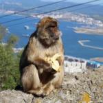 猿のバナナを食べる時の皮の剥き方とは!?