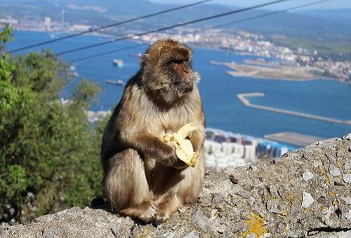 猿 バナナ 皮