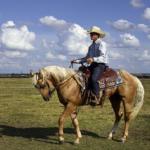 カウボーイが乗る馬の種類は何!?