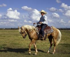 カウボーイ 馬 種類