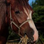 馬の消化時間はどれくらい!?