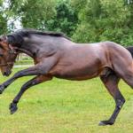 馬は草を食べるのになぜ筋肉が発達しているの!?