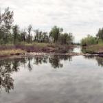 ビーバーが作るダムは自然破壊になっている!?