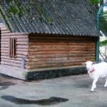 ヤギの小屋の作り方!大きさはどれくらいがベスト!?