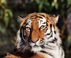 ジャガー ライオン トラ 違い