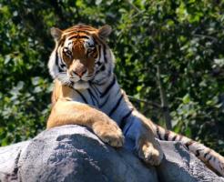 虎 年齢 人間